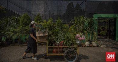 Janda Bolong Daun & Tanaman Hias Makin Melangit